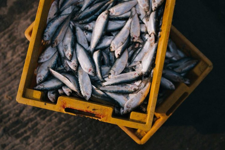como saber si el pescado esta fresco